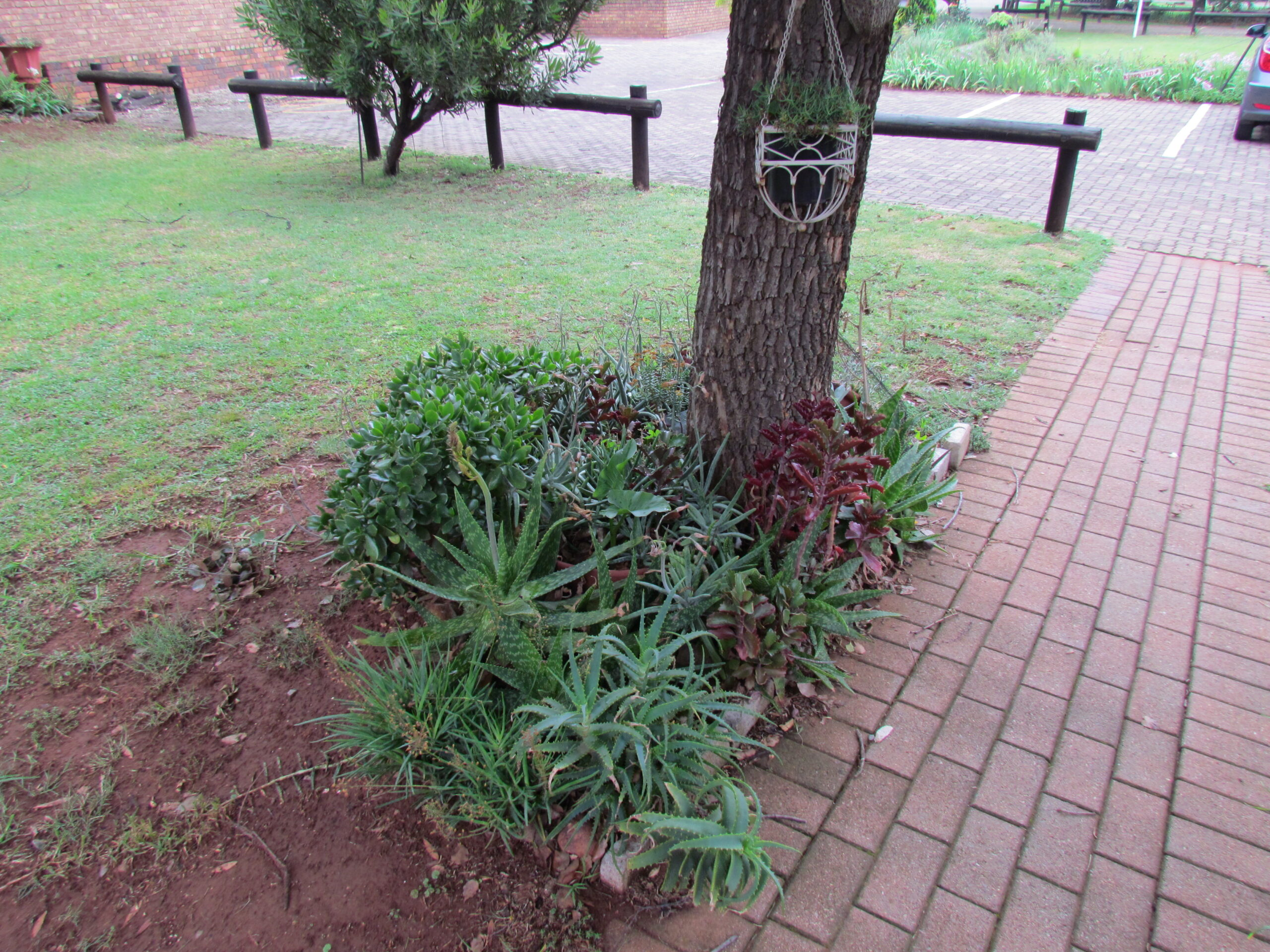 Golden Year Rotary - Garden 2
